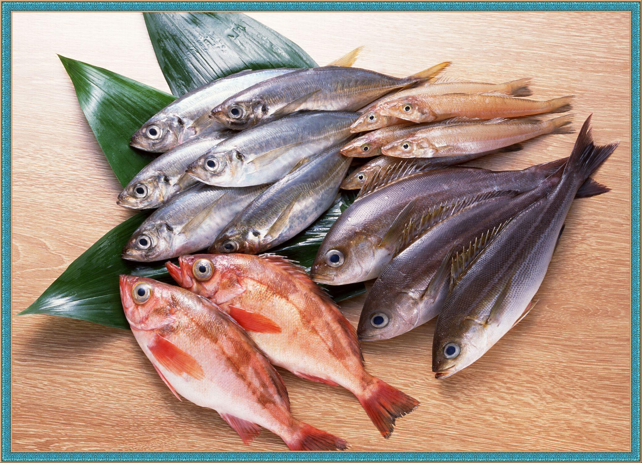 Морская рыбаы с фото